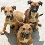 dog-news-African