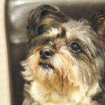 dog-news-DNATest