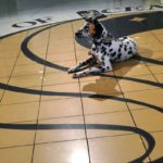 dog-news-servicedog
