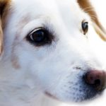 dog-news-DogBreeds