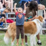 dog-news-DogFaire