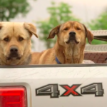 dog-news- DogRescue