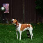 dog-news- RescueDog