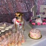 dog news-birthday