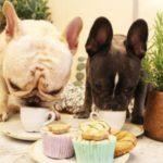 dog-news-French-bulldog