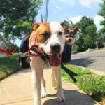 dog -news- DogWorld