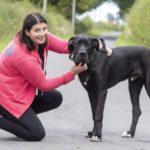 dog-news-British