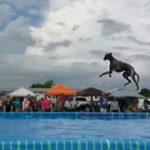 dog -news-DockDriving