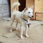 Dog-news-Korea