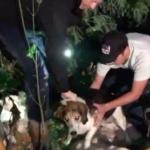 dog-news-Canada