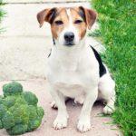 dog-news-DogFood