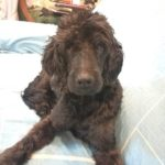 dog-news-Travel