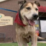 dog-news-DogAdoption