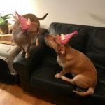 dog-news-happy