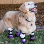 dog-news-HeroDog