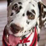 dog-news-dogRescue