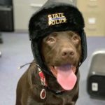 dog-news-PoliceDog