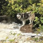 dog-news-DogRescue
