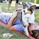 dog-news-DogLife