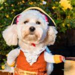 dog_news_Charity