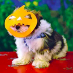 dog-news-Halloween