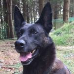 dog_news_PoliceDog