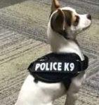 dog_news_K9