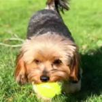 dog_news_Thanksgiving