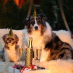 dog-news-New-year