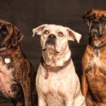 dog-rescue-casino-night