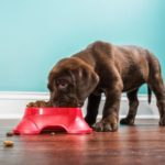 dog-food-recall-FDA