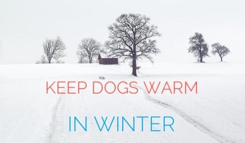 keep-dog-warm-winter