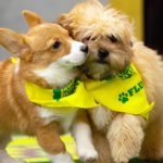 dog-news-PuppyBowl2019