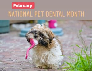 national-pet-dental-month