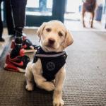 disable_dog_training