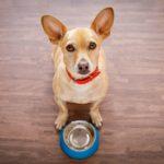 dog_food_recall