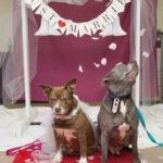 dog_marriage
