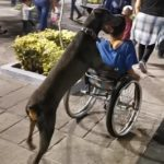 dog_in_nes_Mexico