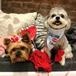 Dogs_Valentine