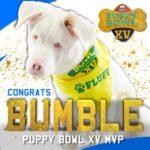 puppy-bowl-MVP