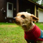 dog-care