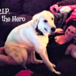 Hero-dog_-Texas