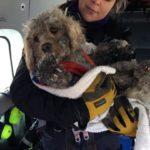 dog-rescue
