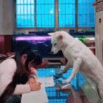 dog-news-china