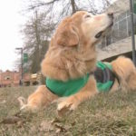 First_service_dog