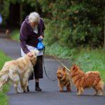 old-dog-walker
