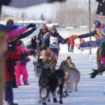 Alaska-sled-dog