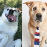 20-adoptable-dog