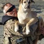 Soldier-resuce-dog