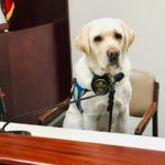 Police-dog-in-court